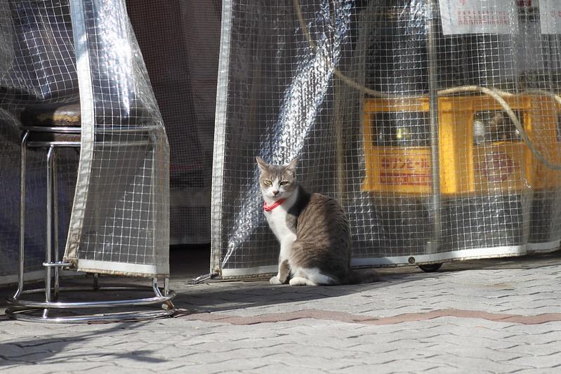 看板猫 1