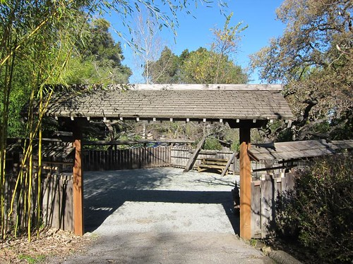 Hakone Japanese Gardens, Saratoga, CA, bamboo IMG_2269