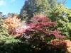 Victoria Park maples