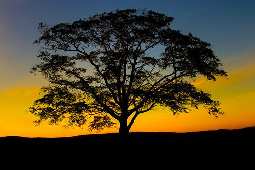 Sunset at Cumbernauld Park by xxx zos xxx
