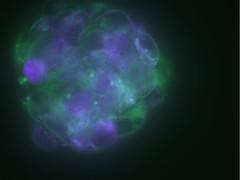 cellsignal02