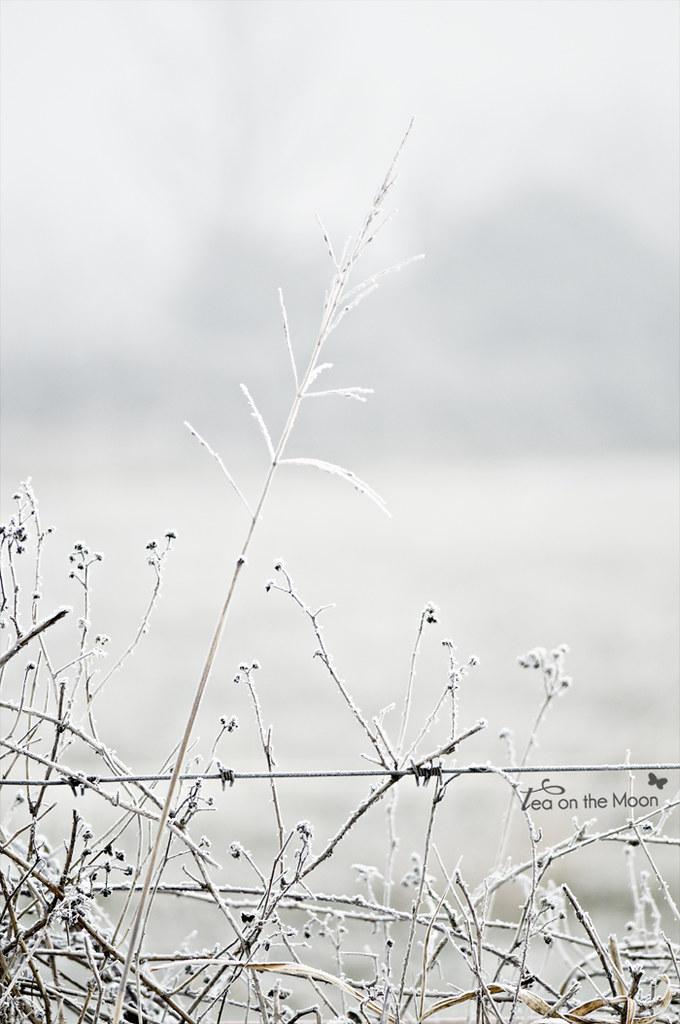 Escarcha de la niebla