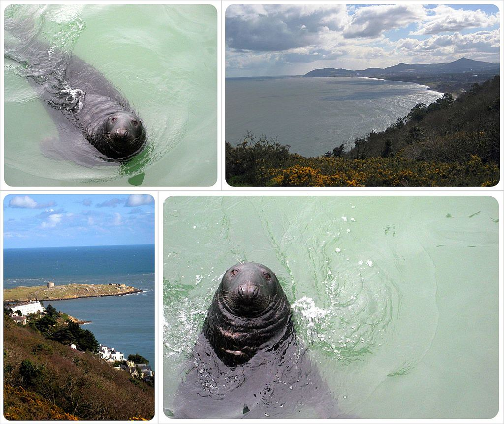 dublin coastline and seals