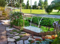 Front Yard Garden - August