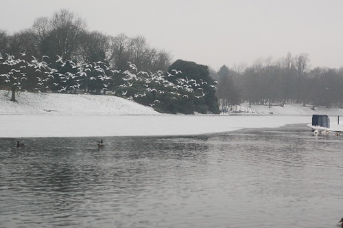 Sefton park in the snow
