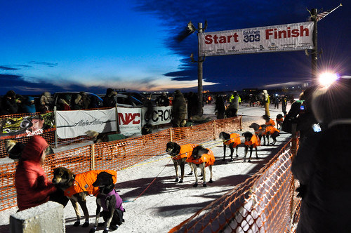 Dog Sled Team in Starting Gate