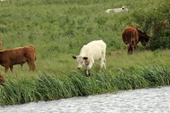 Lakenheath Fen 16-06-2012