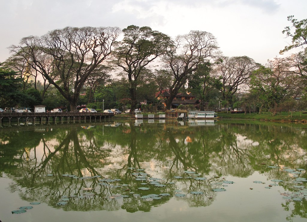 Trees on Kandawgyi lake