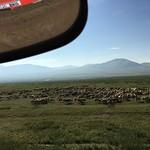 caravan-mongolia-herd