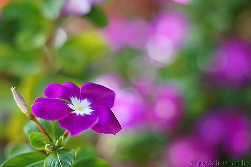 Só Flores... - Página 5 8258970487_363869570d