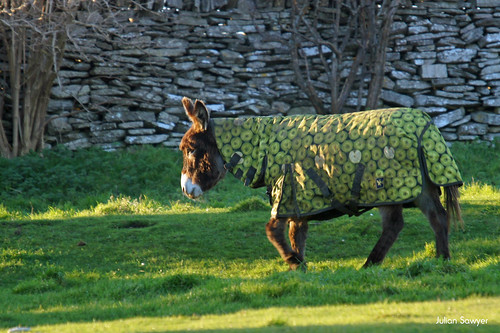 Special Forces Donkeys #9 Camouflage by julian sawyer - Purbeck Footprints