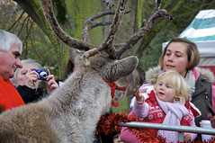 Christmas Market, Reindeer