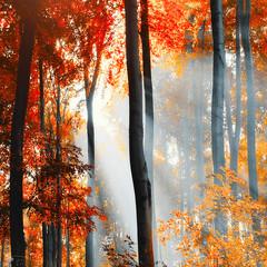 Autumn fever - EXPLORE 14/12/2012