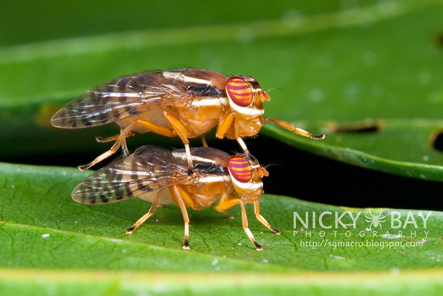 Fruit Flies? - DSC_2541
