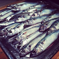 animal, mackerel, fish, fish, seafood, oily fish, food, shishamo,