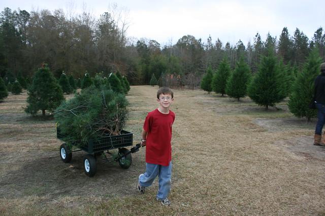 ChristmasTreeShopping2012 - 21