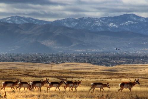 snow hdr ravens photomix bradshawmountains pronghornantelope prescottvalleyaz 89aprescottvalley ringexcellence creativephotocafe