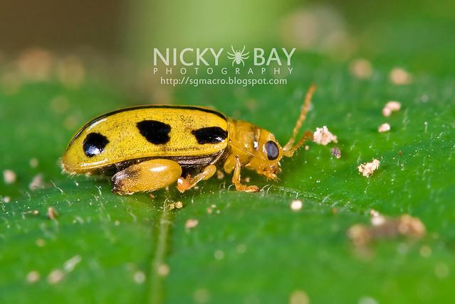 Beetle - DSC_7178