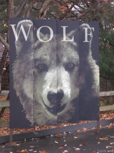 Wolf exhibit sign by Coyoty