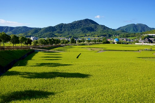 mountains green field japan day rice sony clear 日本 米 apsc nex7 sel24f18z e24mmf18za gettyimagesjapan12q4 gettyimagesjapan13q1 ©jakejung
