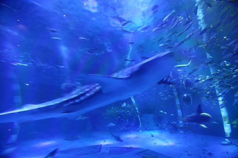 Aquarium Whale shark