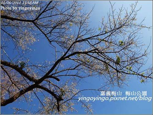嘉義梅山_梅山公園20130106_R0071399490
