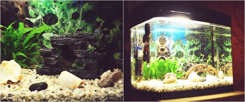 aquariumm