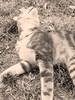A cat life