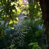 Sunday Morning Moving Points Of Light On Spiderweb Rungs