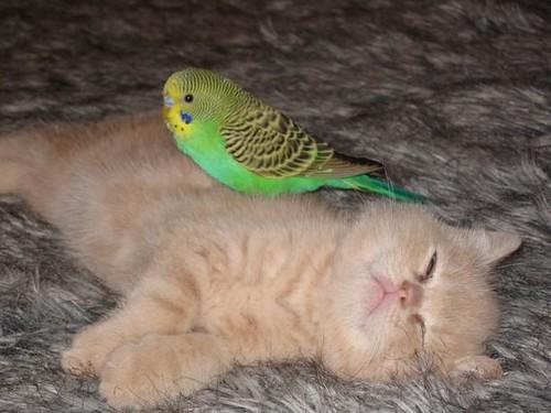 kittenparrot 7
