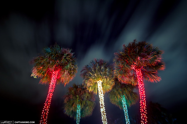 Christmas-Tree-Lights-South-Florida-Style   Flickr - Photo Sharing!