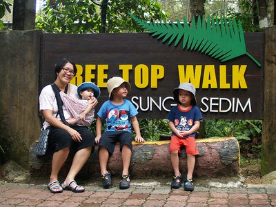 20121111_sedimtreetopwalk
