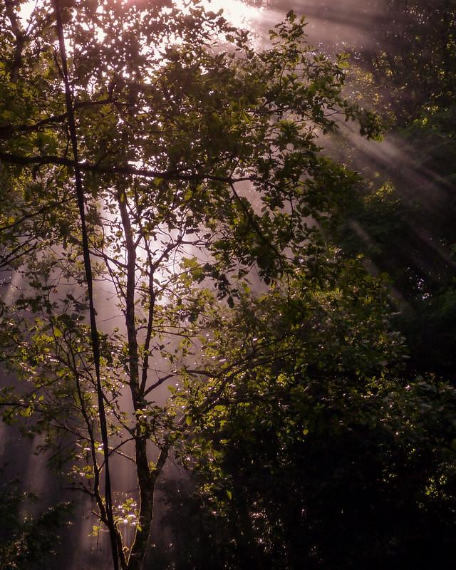 Lumière d'ambiance en forêt... 8273644400_912a4515f5_c