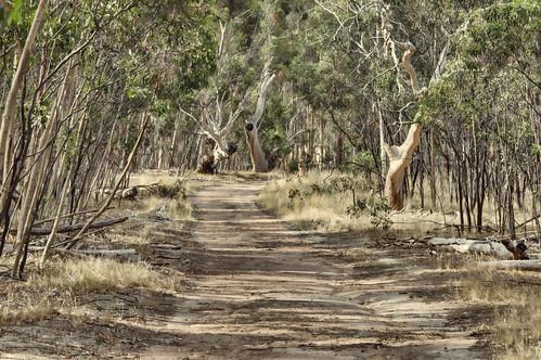Woodlands track 2012-12-15 (_MG_8137_8_9)