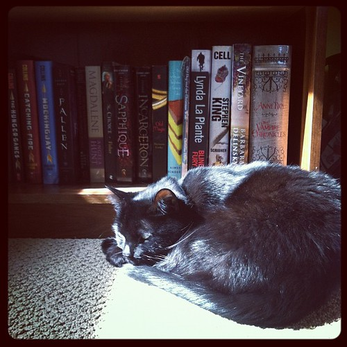 Sleeping in a patch of sunshine.