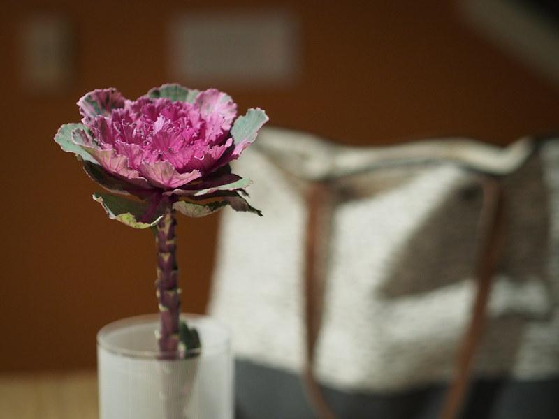 flowering kale