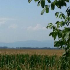 La ligne bleue des Vosges...