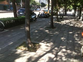 台灣常見的行道樹,在小小的土地中存活。
