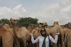 Camel Market (57)