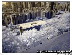 紅外線攝影(IR Photography)@深水埗嘉頓山
