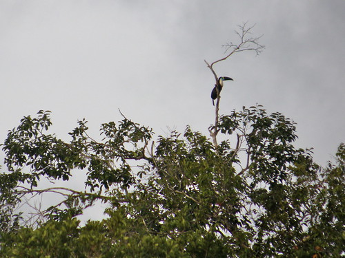 Tucan spotting