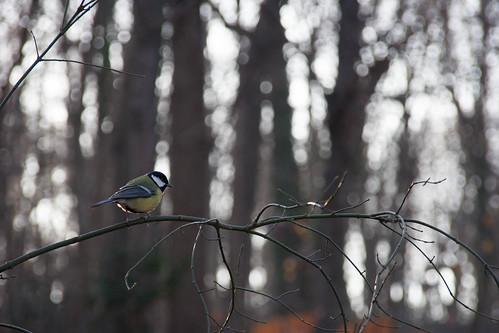 bird - KW53
