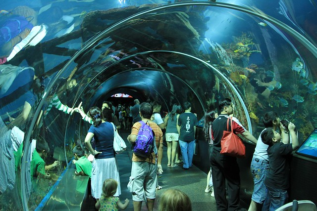 01 s e a aquarium world s largest aquarium and world s largest
