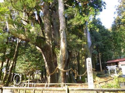 oosugi2013-12