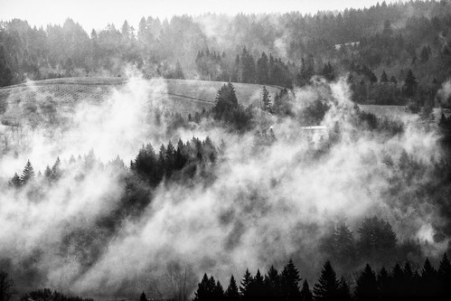 trees bw fog forest woodland landscape washington farm farmland wa canonef70200mmf28lisusm canonextenderef2xii canoneos5dmarkii canon5dmarkii