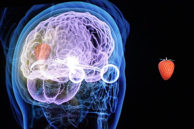 Exposición sobre el cerebro