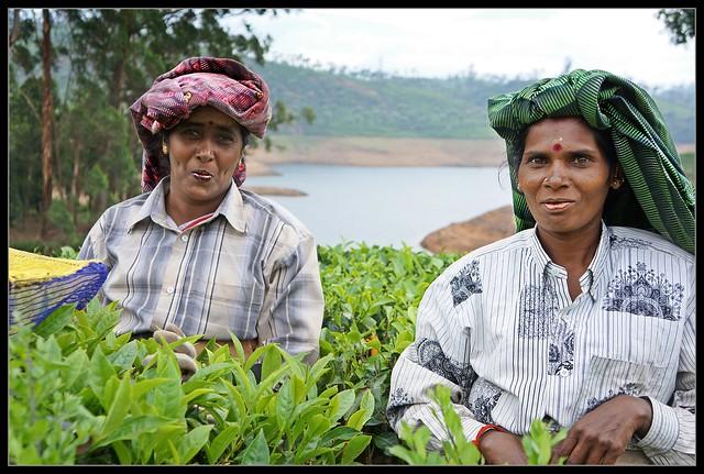 Tea Akkas At Uralikal Estate