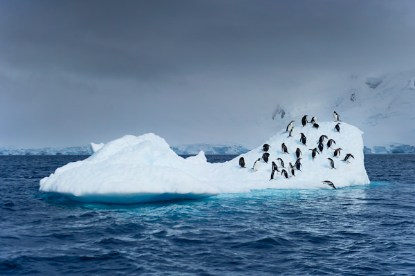 RYALE_Antarctica_Penguins-37