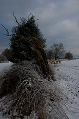 A winter walk in Little Gaddesden