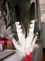 亞成體熊鷹的羽毛呈現三角紋最值錢,圖為工藝店販售定價16,000元的羽扇。(攝影:孫元勳)